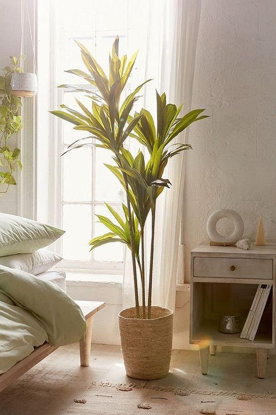 استفاده از گل و گیاه در دکوراسیون